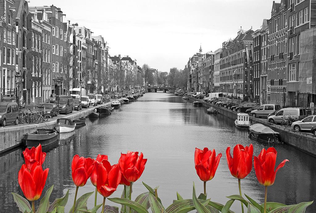 черно белое фото лилия